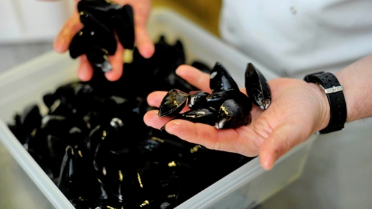 Exmouth Mussel Company